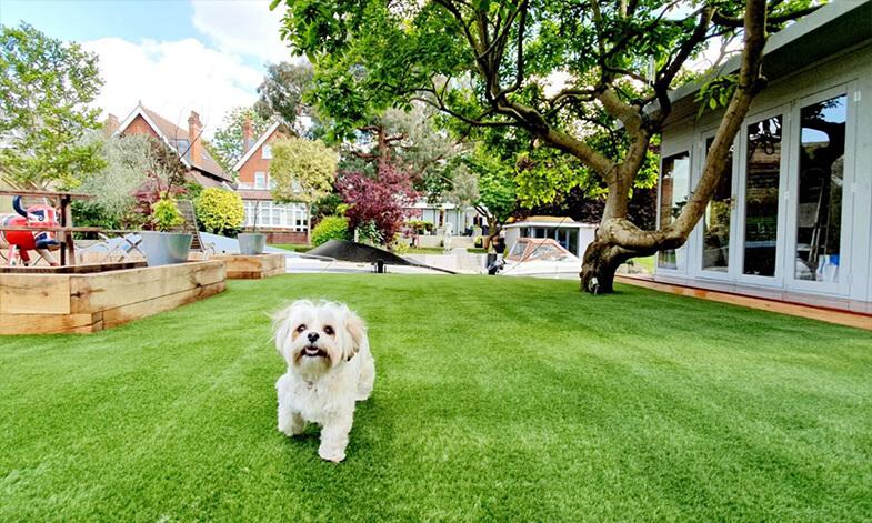 Artificial Grass Dog Easigrass Umhlanga